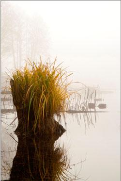 А.Мартынович .Туманное утро на озере