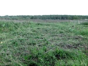 Под Выгоничами и Дятьково загубили свыше трех тысяч гектаров земли